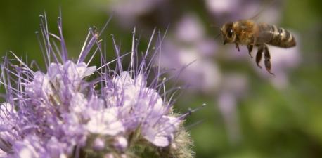 Zasady stosowania środków ochrony roślin w sposób bezpieczny dla pszczół